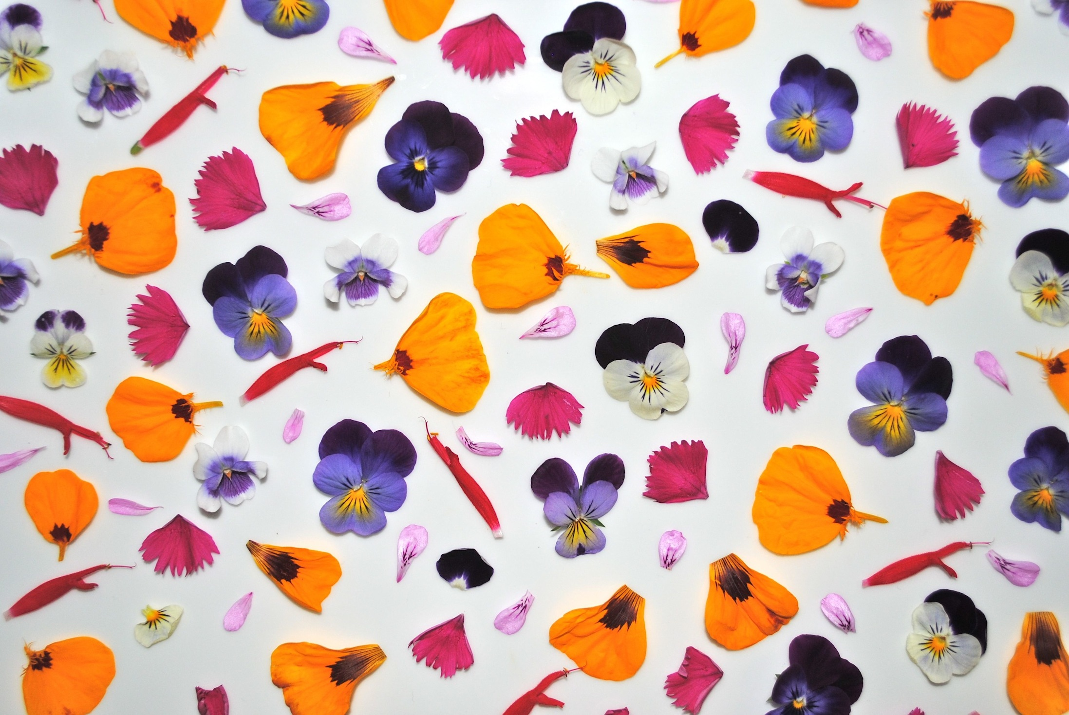 edible-flowers-banner-anna-gregory