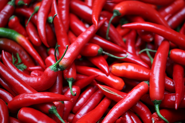 grow-chillies-at-home-1