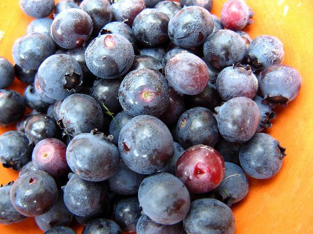 grow_your_own_blueberries_dave_gunn