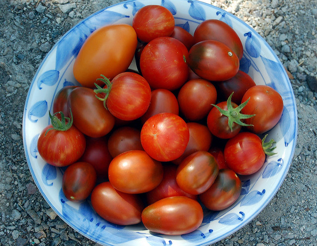 growing_tomatoes_in_australia_tips_lionel__heidi