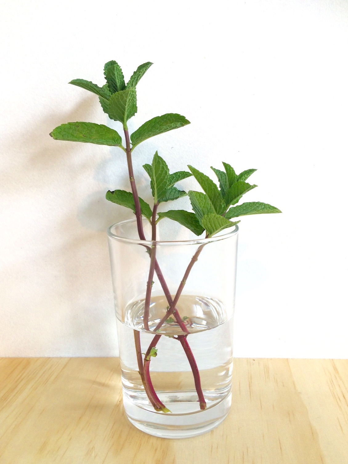how-to-grow-mint-cutting