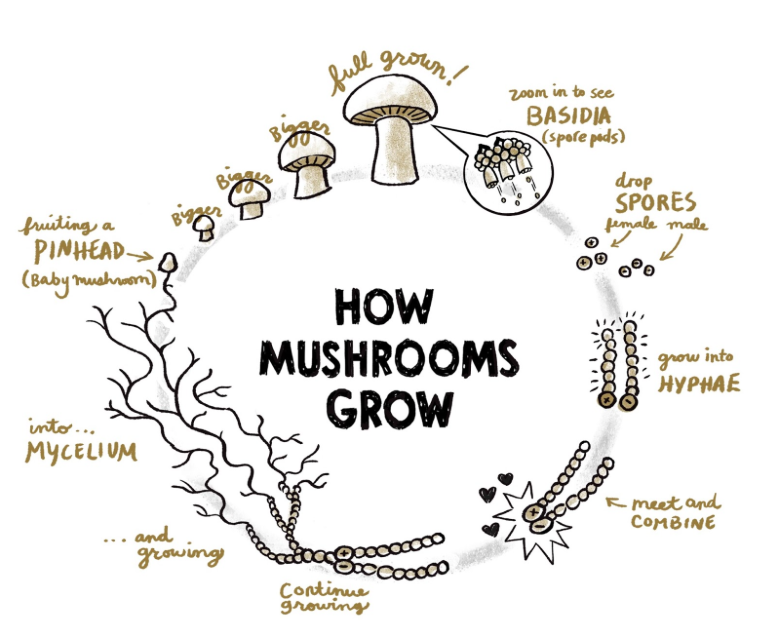 Grow your own mushrooms – small green things